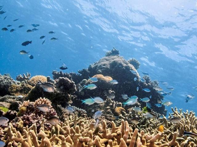 Unesco setzt Great Barrier Reef nicht auf Rote Liste