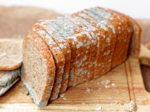 Hitze lässt Brot schneller schimmeln: Backen Sie lieber kleinere Brötchen