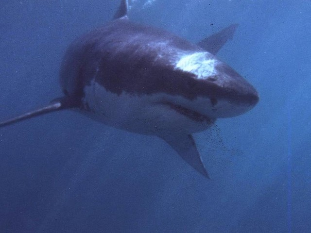 Wurde 26 Jahre alt - Vermutlich durch einen Weißen Hai: Surfer stirbt vor Küste Kaliforniens