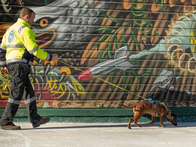 Rettungshunde: Die Partner mit der feinen Nase
