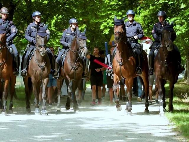 Internes Video: Polizeipferde erschrecken vor Sirenen