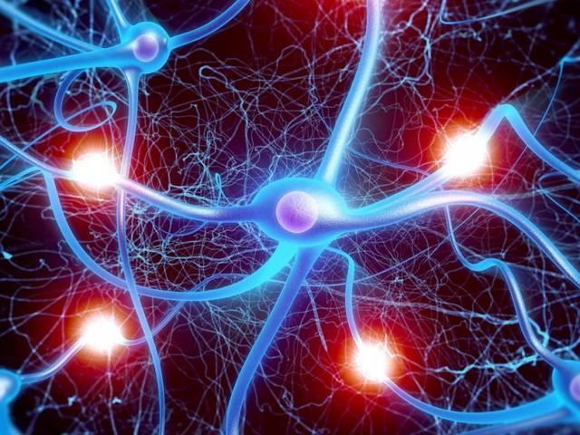 Diese Gehirnleistung unterscheidet uns wirklich vom Tier