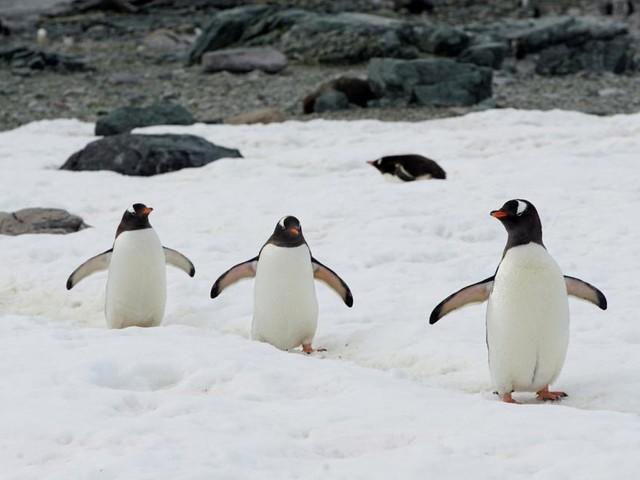 Umwelt: Wie vertretbar ist eine Kreuzfahrt in der Antarktis ?
