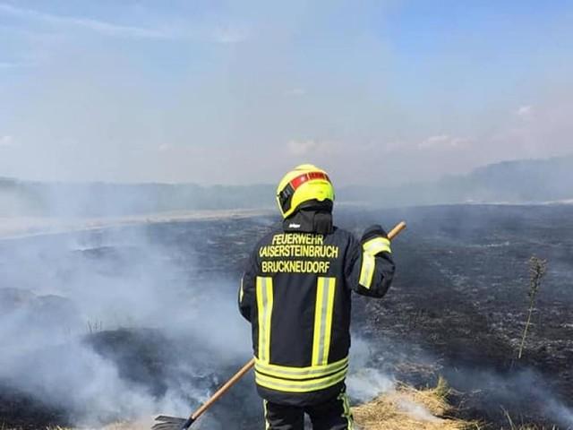 Flurbrände im Burgenland: Wenn die Felder wieder Feuer fangen