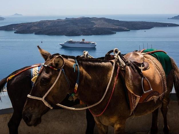 In Griechenland: Übergewichtige Touristen dürfen nicht mehr auf Eseln reiten