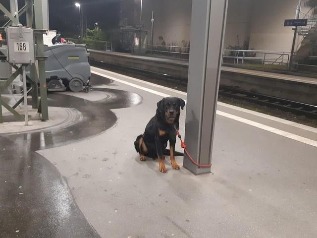Hauptbahnhof Bremen: Mann bindet Rottweiler an – gesperrte Bahnsteige, verlegte Züge