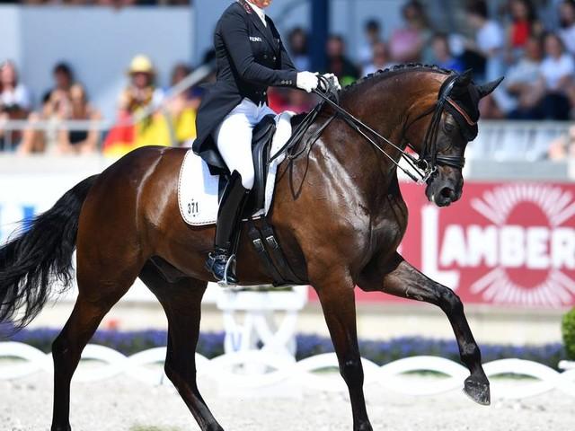 Viele offene Fragen: Entsetzen nach Sekundentod von Pferd Rock and Rose