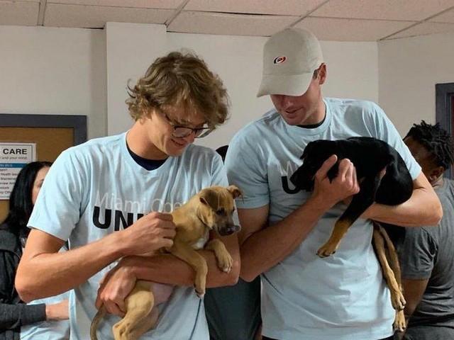 Bei Ausflug ins Tierheim: Zverev adoptiert Hundewelpen in Miami