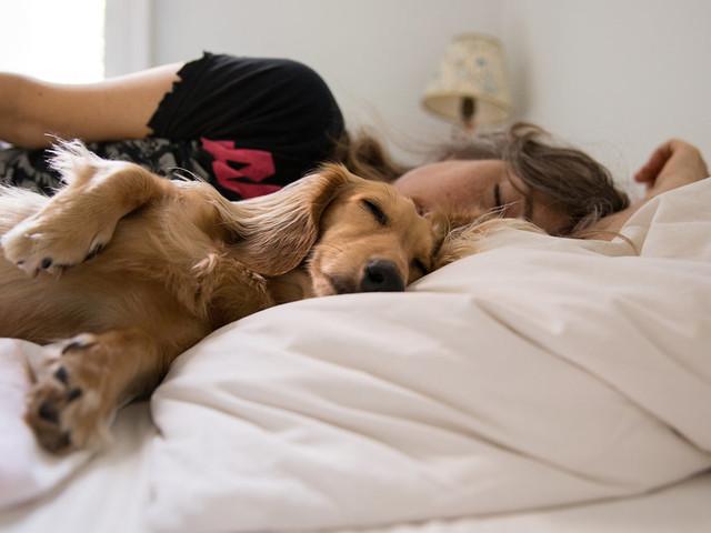 Hund im Bett: Studie zeigt, dass Frauen neben ihren Hunden am besten schlafen
