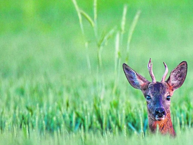 Reh in Innsbrucker Wald mit Armbrust erschossen