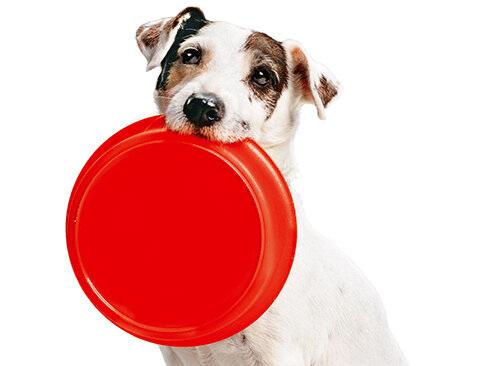 Hundefutter: Barf oder Dose? Nassfutter von sehr gut bis mangelhaft