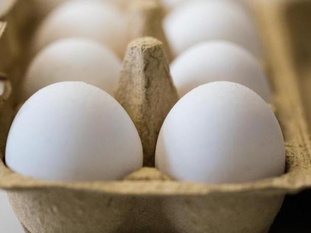 Agrar: Wendorff: Haltungsbedingungen für Bio-Eier unproblematisch