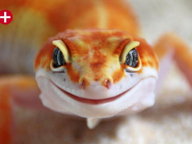"""Reptilien: Züchter aus Olpe: """"Reptilien sind keine Kuscheltiere"""""""