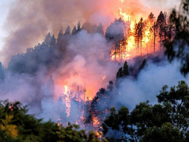 Waldbrand auf Gran Canaria wütet weiter
