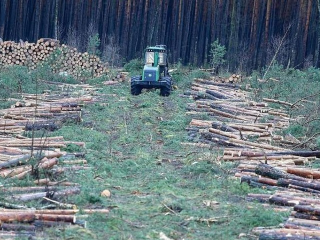 """Umweltaktivisten stoppen Abholzung - """"Muss nicht gegen alles sein"""": Selbst die Grünen kritisieren Rodungsstopp bei Tesla"""