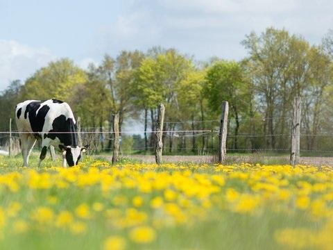 Biomilch lässt Ökolandwirtschaft in Niedersachsen wachsen