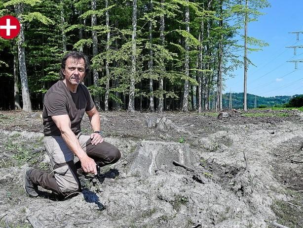 Tiere: Hagen: Gerissene Ricke erleidet qualvollen Tod – Jäger sauer