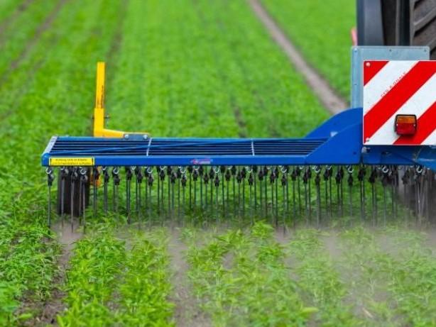 Landwirtschaft: Deutlich mehr Öko-Bauern in Deutschland