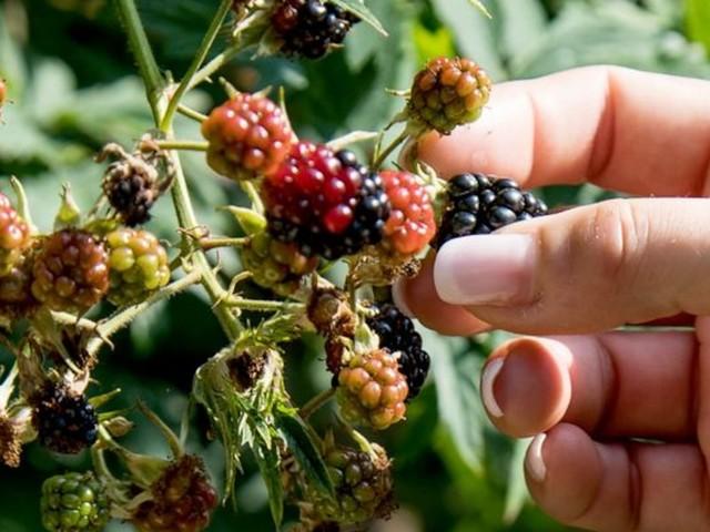 Obst selber pflücken - Äpfel, Beeren & Co. gratis: Warum die 10-Meter-Regel so wichtig ist