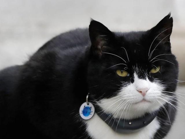 Londons populärster Mäusefänger : Ein Kater geht in Pension
