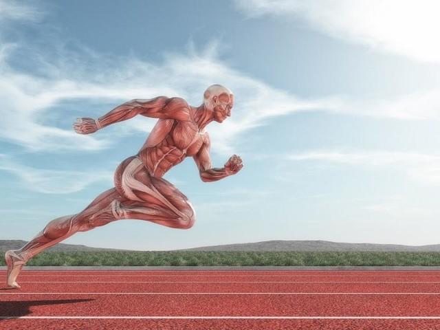 Von Faszie bis Faser: Wie uns unsere Muskeln gesund halten