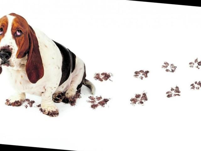 Hund, Katze und Co: So bleibt der Haustier-Haushalt sauber