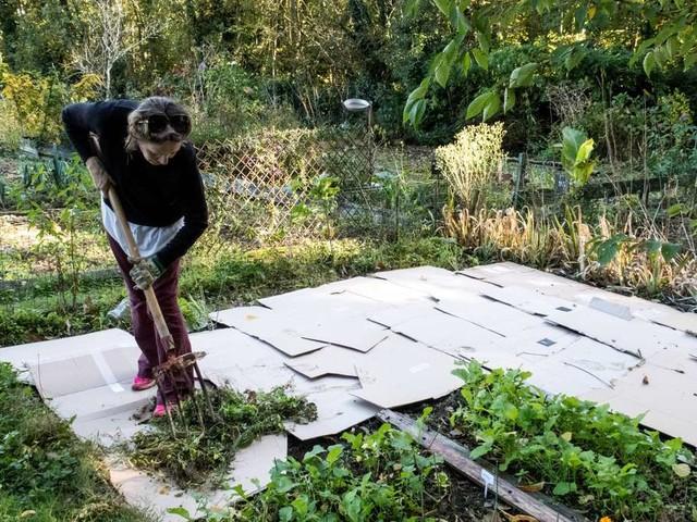 Pappe im Garten: So helfen die Kartons der Erde im Garten
