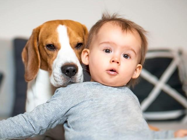 Wenn Eltern ihre Babys wie Hunde erziehen