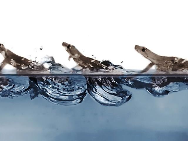 Überraschende Entdeckung: Der Jesus-Gecko