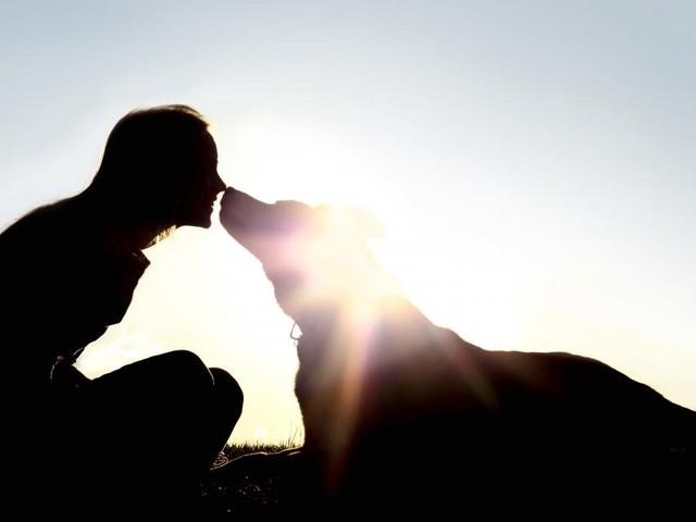 Warum schauen Hunde ihren Besitzern manchmal ähnlich?