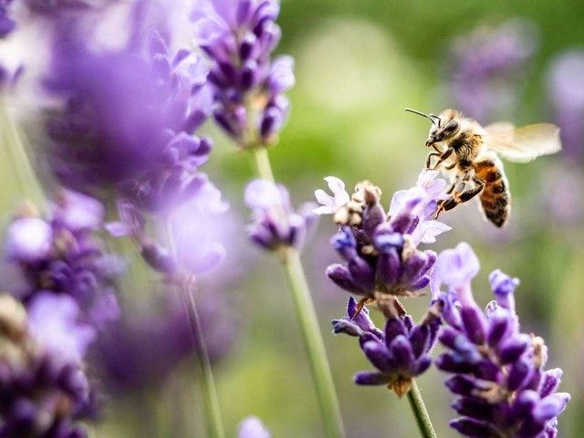 Bienensterben: Mit diesem Trick können ganze Völker gerettet werden