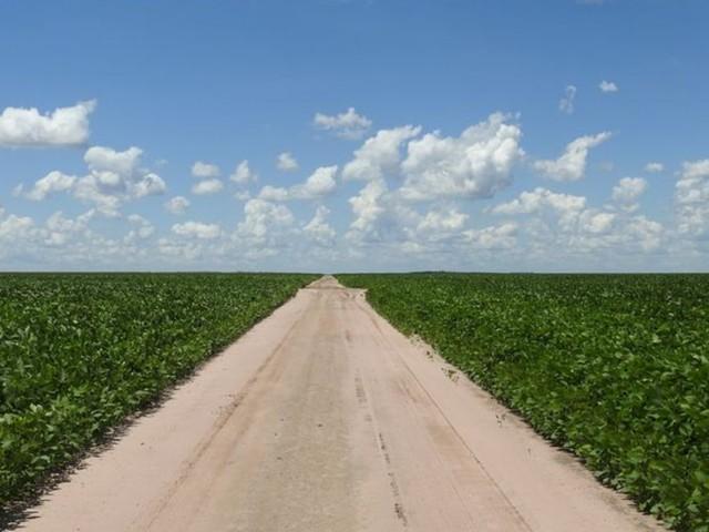 Umwelt: Soja-Anbau im Amazonas binnen weniger Jahre vervielfacht