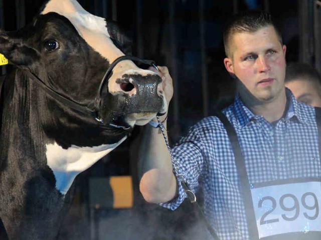 """Das Tier wurde 13 Jahre alt: Deutschlands schönste Kuh """"Lady Gaga"""" ist tot"""