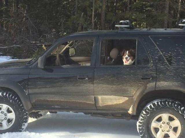 Tagelang in Auto eingeschneit - Mann und Hund überleben dank dieses Tricks