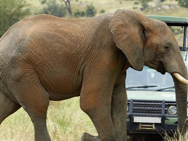59-jähriger Tourist in Namibia von Elefant zu Tode getrampelt
