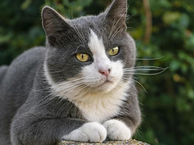 Geräusch mit vielen Funktionen: Katzen schnurren, wenn sie glücklich sind – aber auch in großer Not