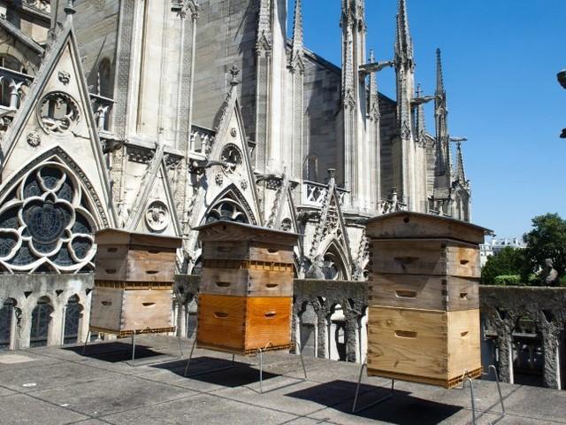 Kirchenimker: Bienenstöcke überstehen Brand von Notre-Dame
