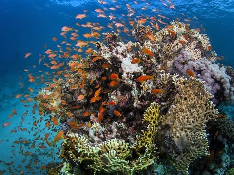 """UN: Great Barrier Reef nicht als """"bedrohtes"""" Welterbe eingestuft"""