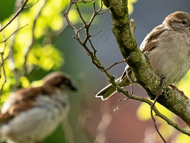 Hitzewelle: Nabu empfiehlt wegen der Hitze mehr Vogeltränken in Städten