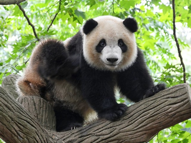 Kommunikation: Der Pandabären-Irrtum