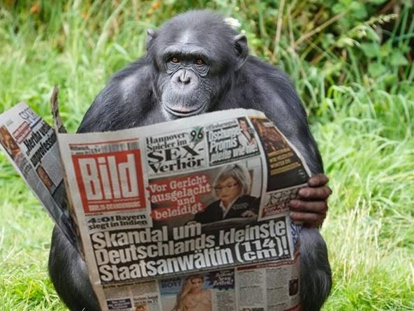 """Wissenschaftliche Sensation: Schimpanse kann """"Bild""""-Zeitung lesen"""