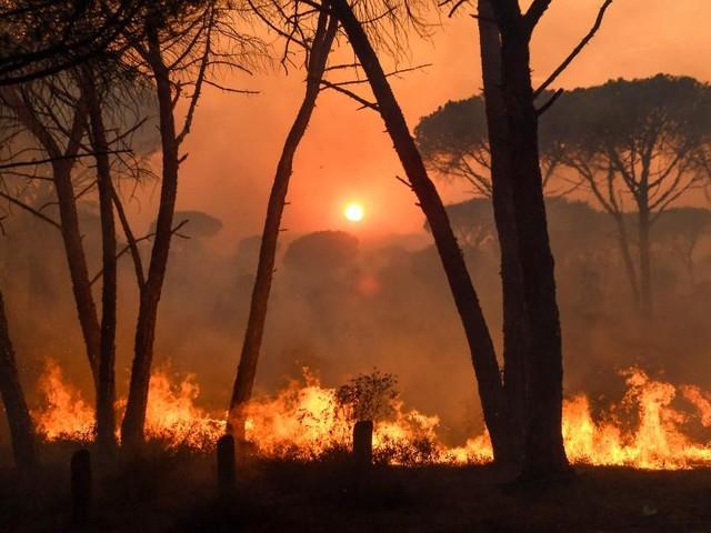 Massive Waldbrände in Portugal und Südfrankreich