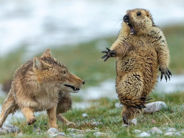 Die Wildlife Photographer of the Year Awards wurden vergeben – die Bilder sind DER HAMMER
