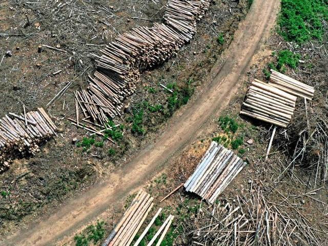 Greenpeace ortet Industrie-Attacke auf EU-Gesetz für globalen Waldschutz