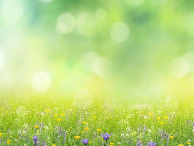 Java-Framework: Nativ testen mit Native Spring 0.10