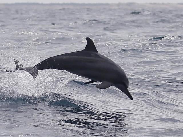 Wissenschaftliche Sensation: Erstmals Delfin beim Gähnen beobachtet