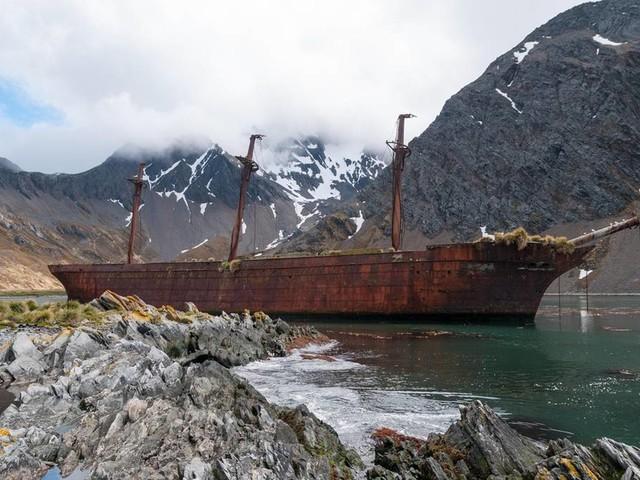 Ian McGuire - Nordwasser: Der härteste Roman über den Walfang