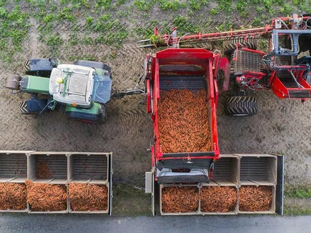 Nachhaltige Landwirtschaft: Immer mehr Öko-Bauern in Deutschland