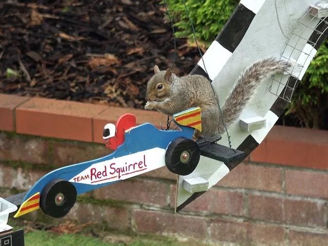 'Furmula 1' – Der Eichhörnchen Grand Prix von Steve Barley