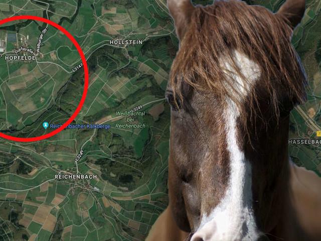 Frau verkauft Pferd - als sie Tier wiedersieht, bricht ihr beinahe das Herz